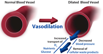 vasodilation Fitness Nutrition For Faster Results (Fueling your workout)