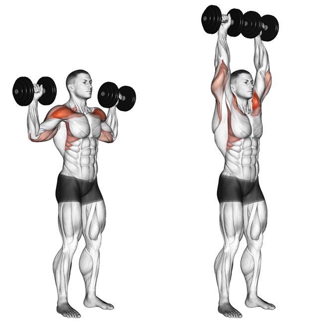 The Overhead Press The Actual Difference Between Seated: Beaufort Personal Training: Shoulder Press