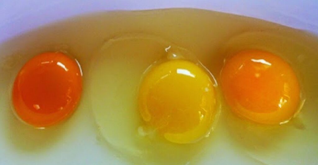 Eggs vs Egg Whites: Which Is Healthier?