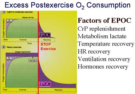 Excess Post Oxygen Consumption Explained by Personal Trainer Beaufort